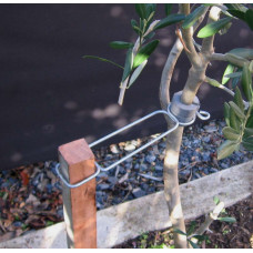 Ascot Tree Clip