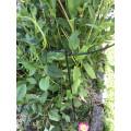 Bushy Flower Ring 300mm dia - Black