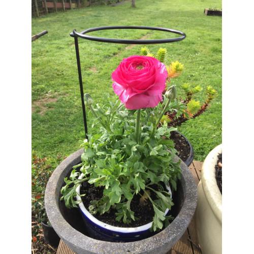 Flower & Stem Loops & Hoops