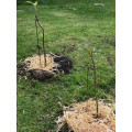Tall Open Loop-Standard or tree stake-880mm height -Silver