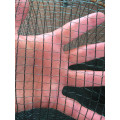 Elaion Netting-bird or nut collection
