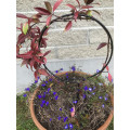 Pot Plant Trellis-25cm diameter black