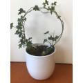 Pot Plant Hoop - 20cm Diameter silver