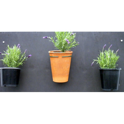 Pot Plant Holder - fixed to wall coloured