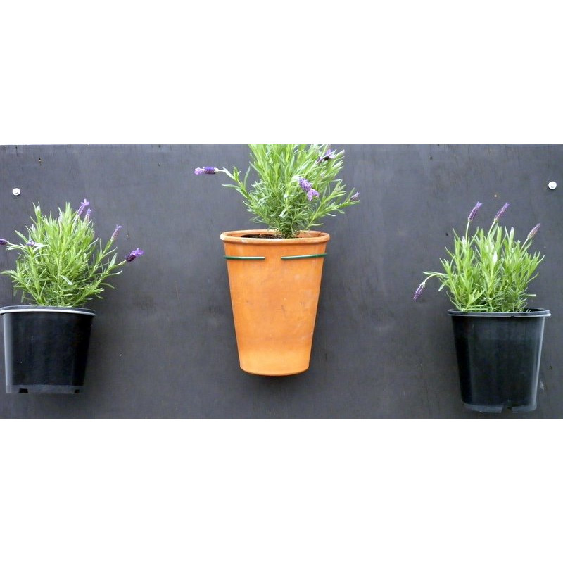 Pot Plant Holder Fixed To Wall Coloured Growing Things