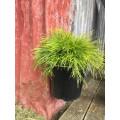 Pot Plant Hanger 150mm coloured