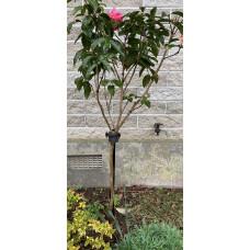 Ascot Standard Rose Stake - 1200mm Satin Black