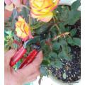 Harvesting/Pruning Scissors