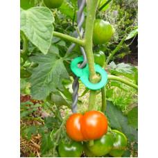 Tomato Stake -TOMTWIST-900mm Height - 4 Clips