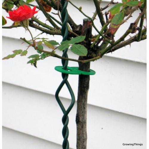 Rose Twiststakes