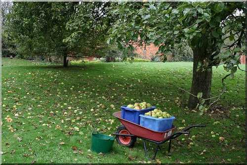 Growing things has products for your lifestyle plot and orchard